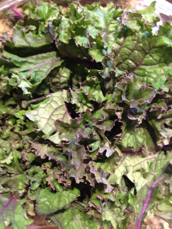 Kale leaves after being pulled off of the pretty purple stems