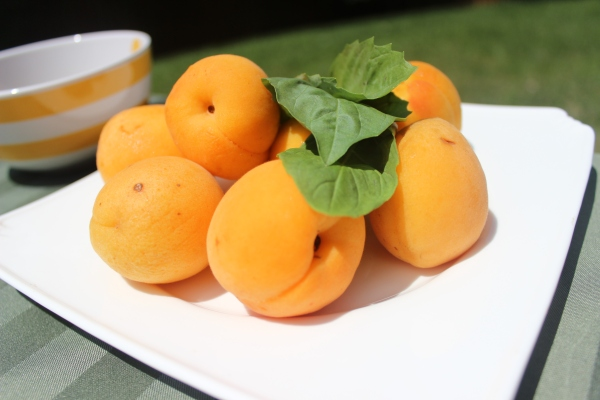 Mmmm fresh apricots!